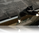 cat jumping roof